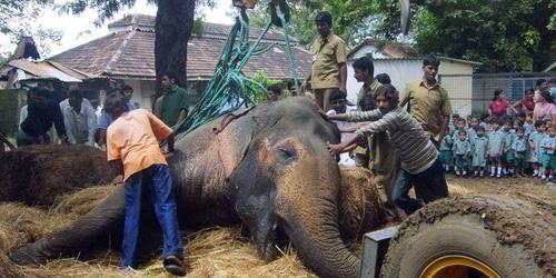 elephants elephants ELEPHANTS