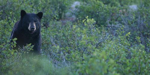 just a bear