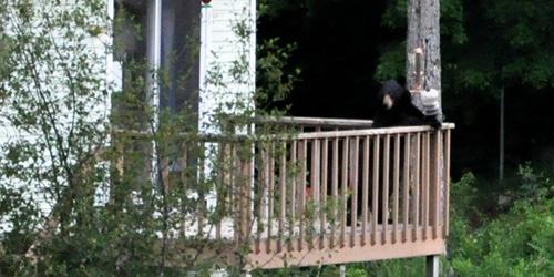 bears doin thangs