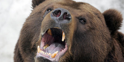 scavenging Russian bears
