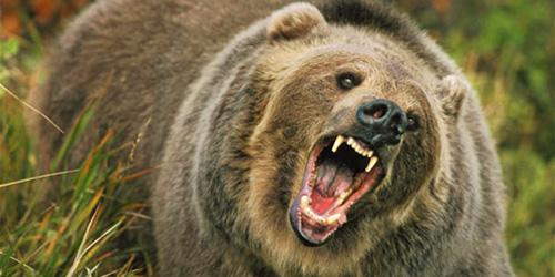 raging, raging bear