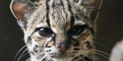 tiger cat looking annoyed