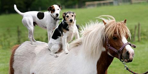 DOGS... uh, on a pony