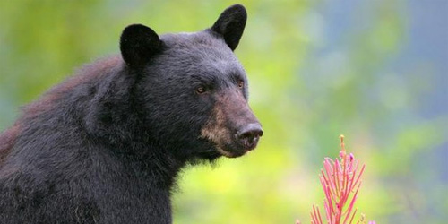 this creepy bear