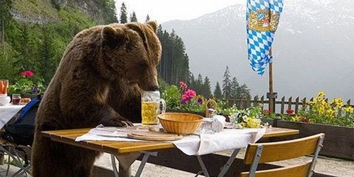 alcoholic bear wants all the beers