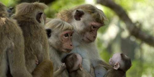 something something illegal monkeys?