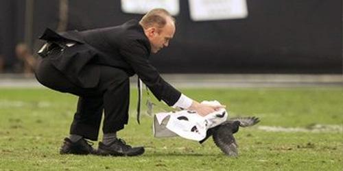 Raiders personnel versus pigeon