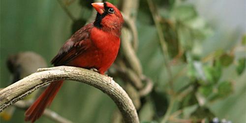 some random cardinal that hates me
